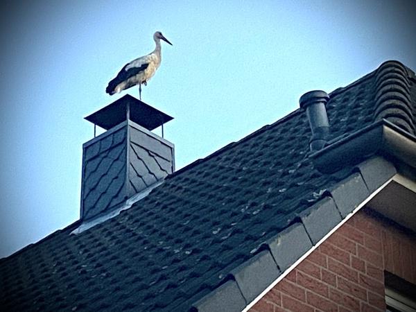 Adebar auf dem Dach (Foto: Jana Franke)