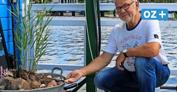 """""""Watschelbein"""": Wie eine Ente zur Attraktion im Wolgaster Hafen wurde"""