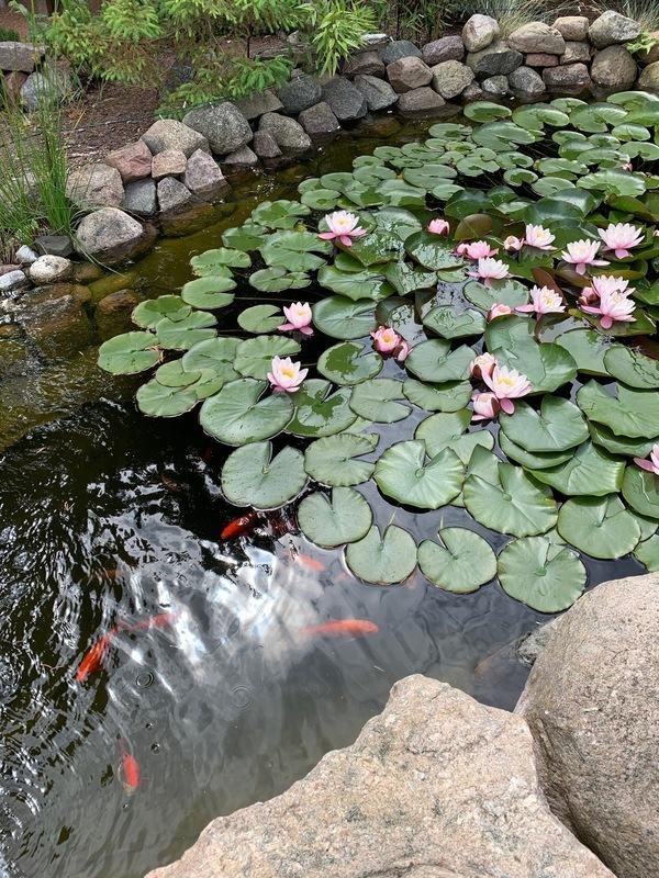 Goldfischparadies (Foto: privat)
