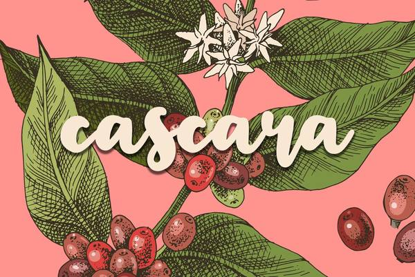 New Podcast! Cydni Patterson's Cascara Debuts On The Sprudge Podcast Network