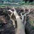 Pandemie z naszej winy... czyli jak niszczenie ekosystemów zwiększa ryzyko pandemii i jak możemy temu zapobiec.