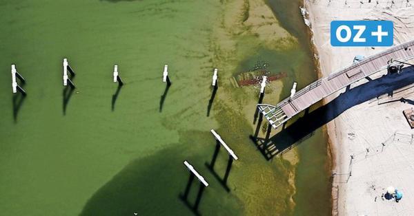 So viele Schrauben werden in der Koserower Seebrücke verbaut