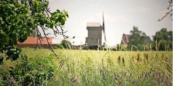 In Ketzür steht eine historische Bockwindmühle am Rand des Wanderweges. Foto: Jaqueline Steiner