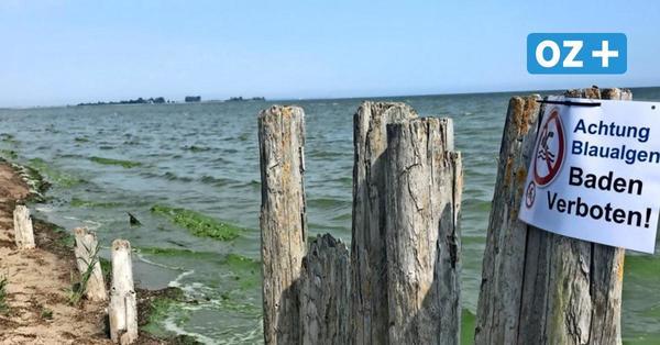 Blaualgen-Alarm: Droht den Seen in Nordwestmecklenburg ein Badeverbot?