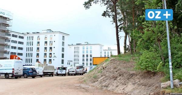 Rügen: Baumfällarbeiten in Prora geplant