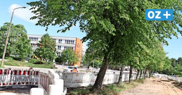 Bäume stehen im Weg: Bauarbeiten im Greifswalder Thälmannring verzögern sich