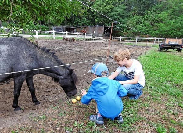 Die Kinder füttern gern das Shetland-Pony Pedro des Kinderbauernhofes. Quelle: Rainer Schüler