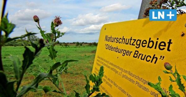 Ärger um Ostküstenleitung bei Oldenburg: Letzter Abschnitt wird wohl eine Freileitung