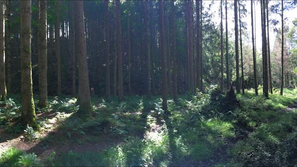 Ardennen- Achouffe