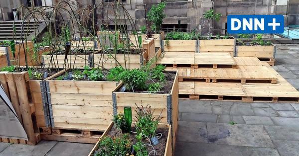 Ein Dresdner Gartenexperte erklärt: So bauen Sie sich selbst ein Hochbeet