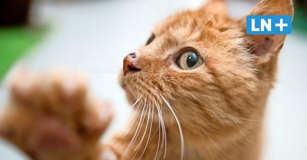 Katze stranguliert und in Teich geworfen: Prozess um Tierquälerei endet mit Geldstrafe