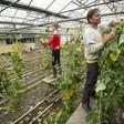 Loeren bij de boeren: het is oogsttijd bij kwekerij EKO Logisch