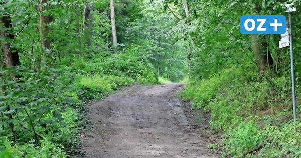 Verwüsteter Rugard-Wald auf Rügen: Wie geht es weiter?