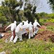 Ghana records three new coronavirus deaths, active cases now 801