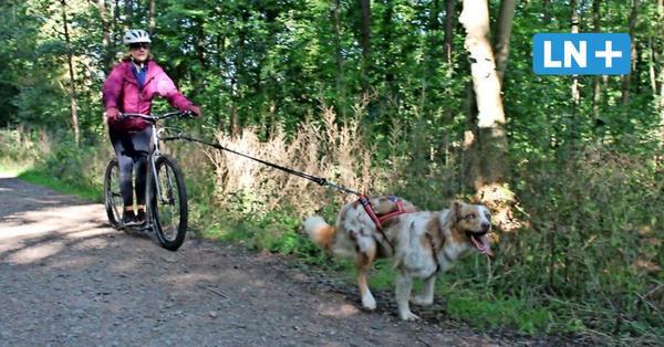 Sport mit Hund: So funktioniert Dogscooting