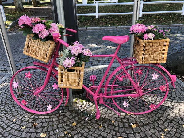 Pinkes Fahrrad vor dem Rathaus in Bad Doberan. (Foto: Cora Meyer)