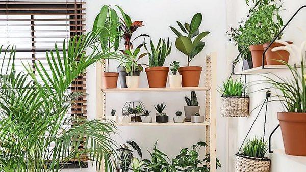 Grüne Superhelden: Zimmerpflanzen fürs Wohlbefinden