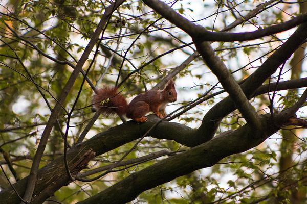 Unterwegs im Ricklinger Holz: HAZ-Leserin Sandra Z. hat dieses Eichhörnchen fotografiert.