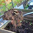 Kompost anlegen: Tipps für Hobbygärtner