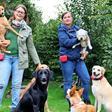 Ostholsteiner im Homeoffice und Heimat-Urlaub: Schwere Zeiten für Tierpensionen