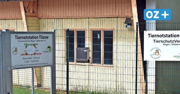 Rügen: Tiernotstation Tilzow erneut vor ungewisser Zukunft