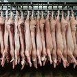Afrikanische Schweinepest: China verhängt Importverbot für deutsches Schweinefleisch