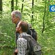 Forscher von Uni und HAWK Göttingen: Die Zukunft der Buchenwälder ist gefährdet