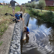 Schaap te water langs Braassemdreef