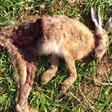 Unbekannte hetzen Tiere zu Tode