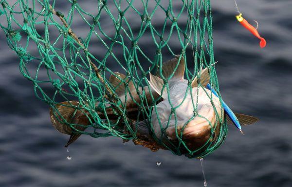 Wären Sie bereit, für Fisch aus der Ostsee mehr zu bezahlen?