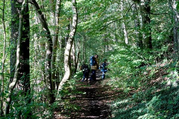 Ein Streckenabschnitt der dreitägigen Wanderung führt am Uferweg des Molchowsees entlang.