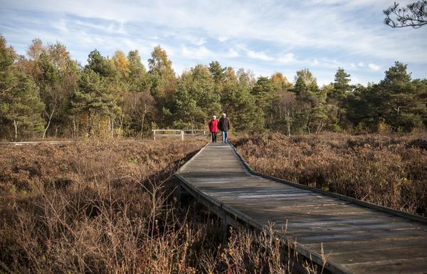 Im Toten Moor hat die Region einen Erlebnispfad angelegt. (Foto: Insa Hagemann)