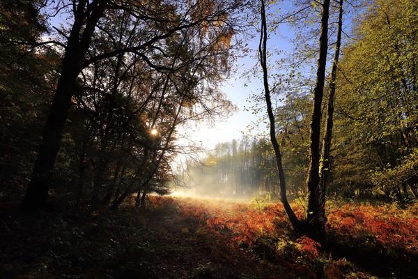 Herbst in der Dübener Heide. Foto: Wiethold Stölzner