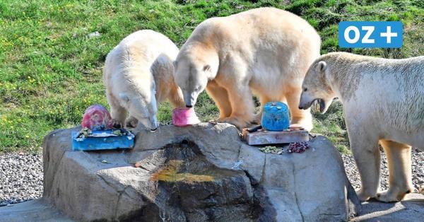 Polarium ist Publikumsmagnet im Rostocker Zoo
