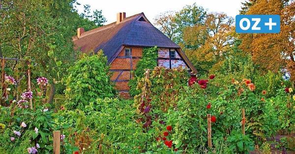 """""""Herbst – Ernte – Austied"""" am Wochenende im Pfarrgarten in Starkow"""
