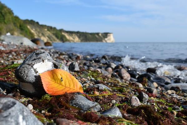 Auf den Spuren des Herbstes (Foto: Corinna Schaak)