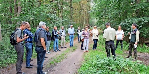 Heringsdorf: Wie soll es mit dem Wald weitergehen?