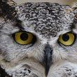 Wahre Überflieger: Hirnstudien erklären, warum Vögel so intelligent sind