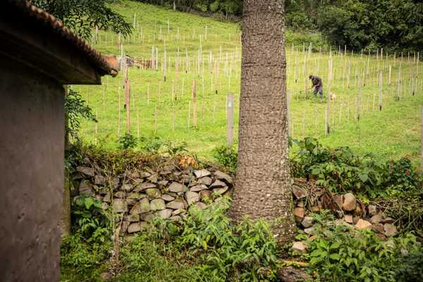Vivente: Very Good Natural Wine From The South of Brazil