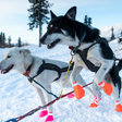 What My Sled Dogs Taught Me About Planning for the Unknown
