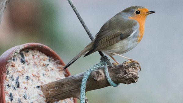 Das müssen Sie beim Bau eines Vogelhauses für den Winter beachten