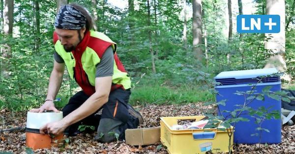 Labor im Fredeburger Wald: Forscher aus Göttingen wollen Bäume verstehen