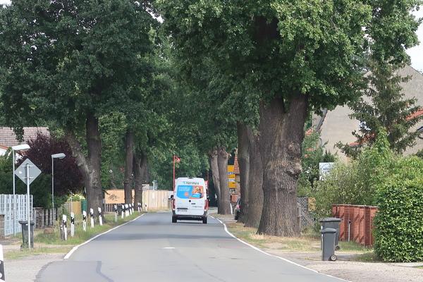 Die Eichen an der Brücker Straße in Beelitz sollen fallen. Foto: Jens Steglich