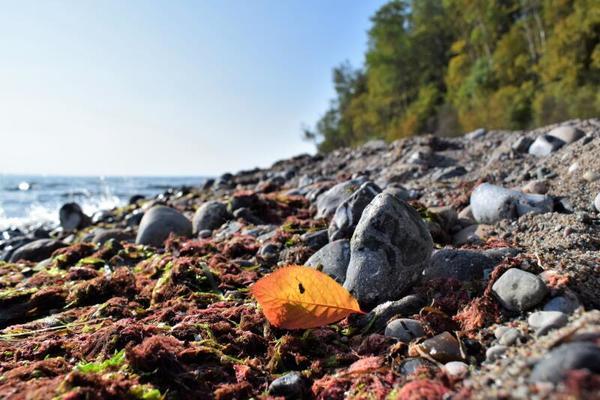Bunte Blätter fallen (Foto: Corinna Schaak)