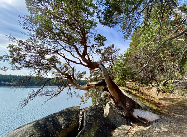 Lifted edge along the high bank by Terrill Welch