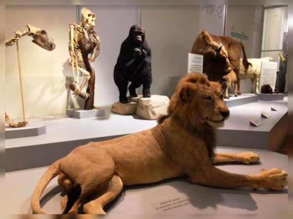 Fête de la science au Musée d'histoire naturelle de Lille - Wetenschapsfeest in natuurhistorisch museum Rijsel