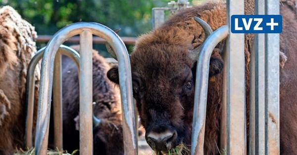 Wildschweine, Wisente, Weißwedelhirsche – auf Entdeckungstour im Wildpark Connewitz