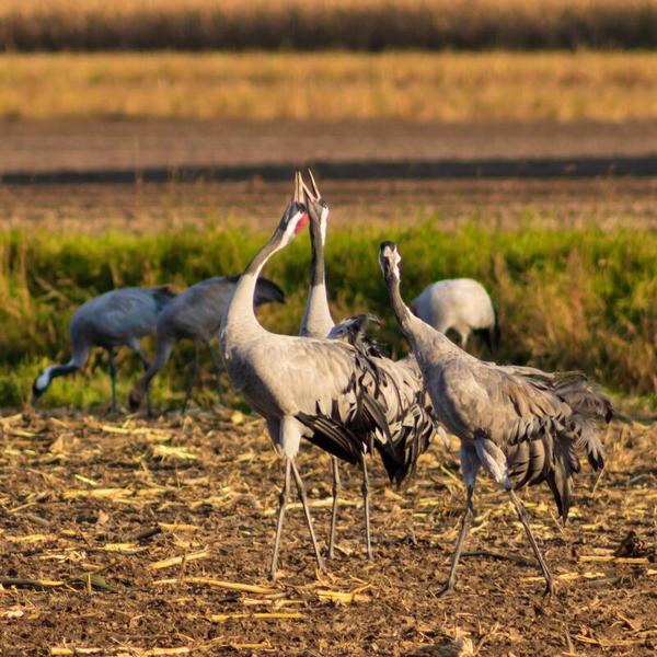 Die Vögel des Glücks (Foto: Marion Schmidt)