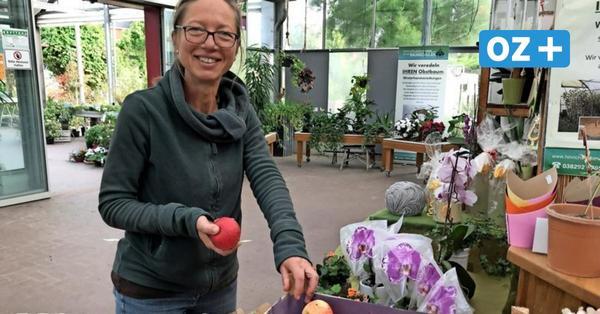 In Kröpelin können Obstsorten bestimmt werden