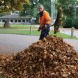 Beseitigung von Laub in Osholstein: Wohin mit den Blättern?
